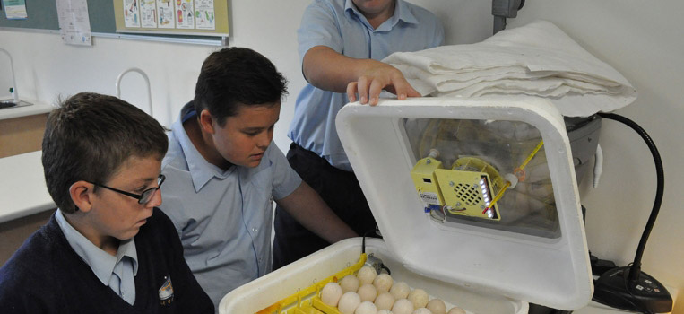 Year 7 Sustainable Agriculture